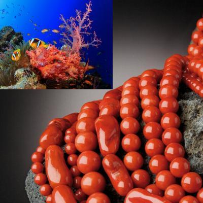 Differenza tra Corallo e Corallo Bambù origini vegetali e marine