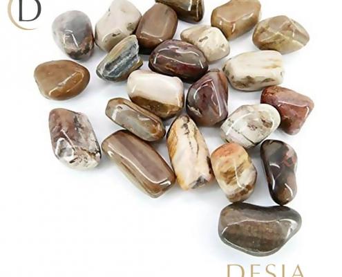 Pietra di legno fossile
